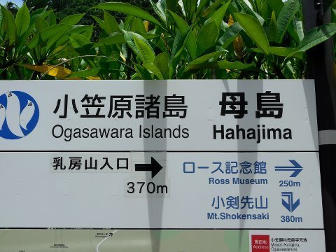 1707ogasawara34.jpg
